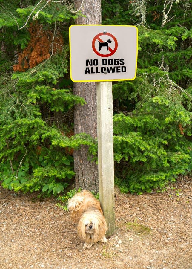 Il cane non gradice il segno fotografie stock libere da diritti