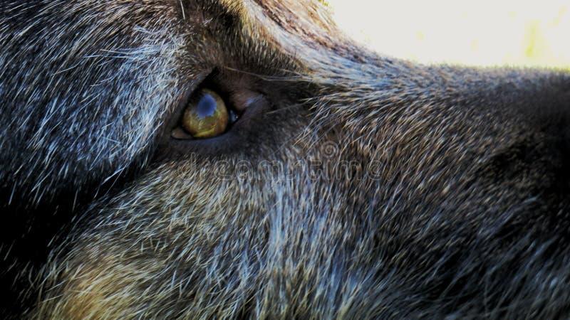 Il cane osserva la mirada de perro fotografie stock libere da diritti