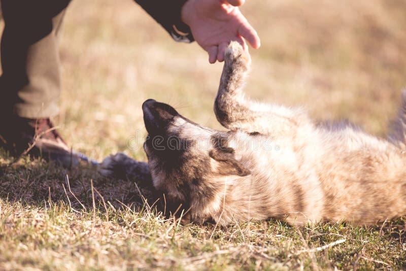 Il cane randagio adottato felice, adotta non compera immagini stock libere da diritti