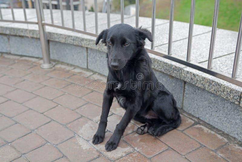 Il cane randagio sta sedendosi sulla pavimentazione fotografie stock libere da diritti