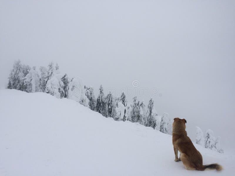 Il cane si occupa del sole fotografie stock