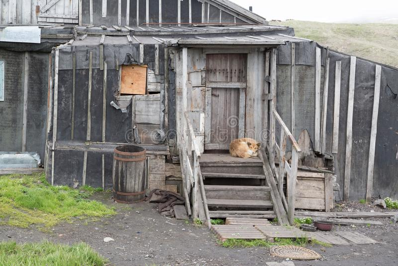 Il cane si trova su un portico della casa fotografia stock