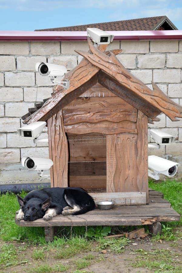 Il cane sta custodicendo la casa è fornito di videosorveglianze fotografia stock