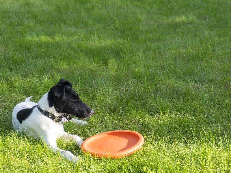 Il cane sull'erba fotografia stock libera da diritti