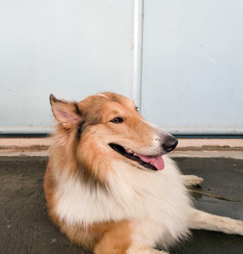 Il cane sveglio immagini stock libere da diritti