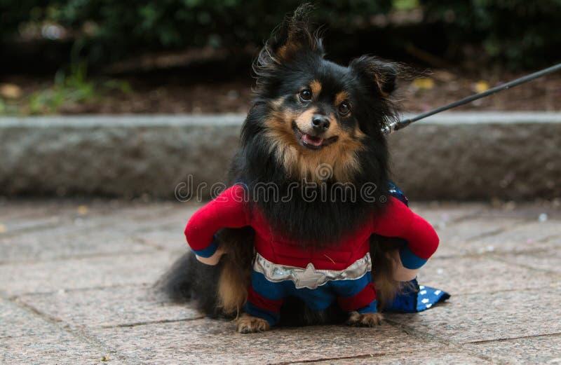 Il cane sveglio porta il costume dell'eroe eccellente al raggiro canino di Atlanta fotografie stock libere da diritti