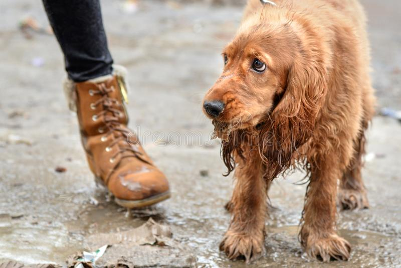 Il cane triste sta sulla terra nel fango fotografia stock libera da diritti