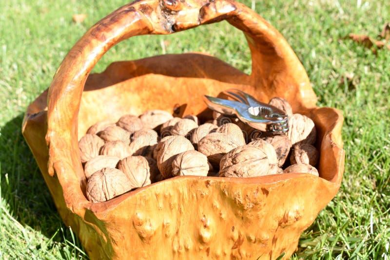 il canestro di legno da una radice di un albero in pieno dei dadi ha raccolto appena e le schiaccianoci fatte in metallo sul mucc immagini stock