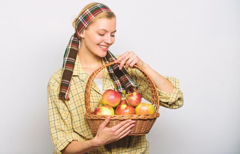 Il canestro rustico della tenuta di stile del giardiniere della donna con le mele raccoglie su fondo leggero Agricoltore o giardi immagini stock