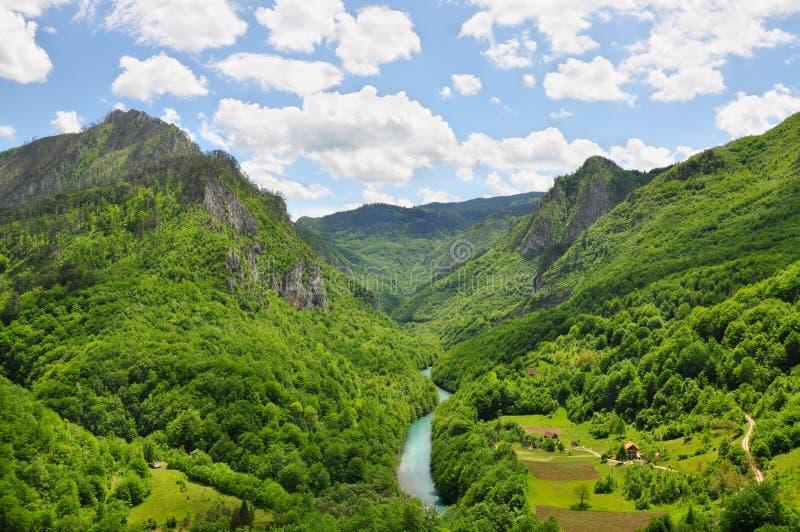 Il canyon di Tara River: un'oasi rara della natura non trattata immagini stock