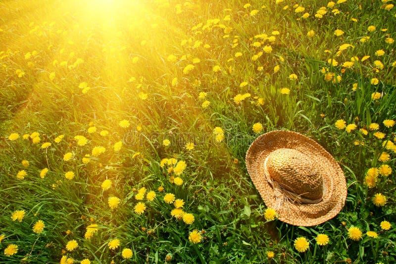 il cappello dell'erba rays il sole della paglia fotografia stock