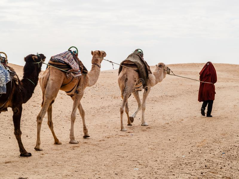 Il caravan nel deserto del Sahara al tramonto si allontana verso l'orizzonte fotografia stock libera da diritti