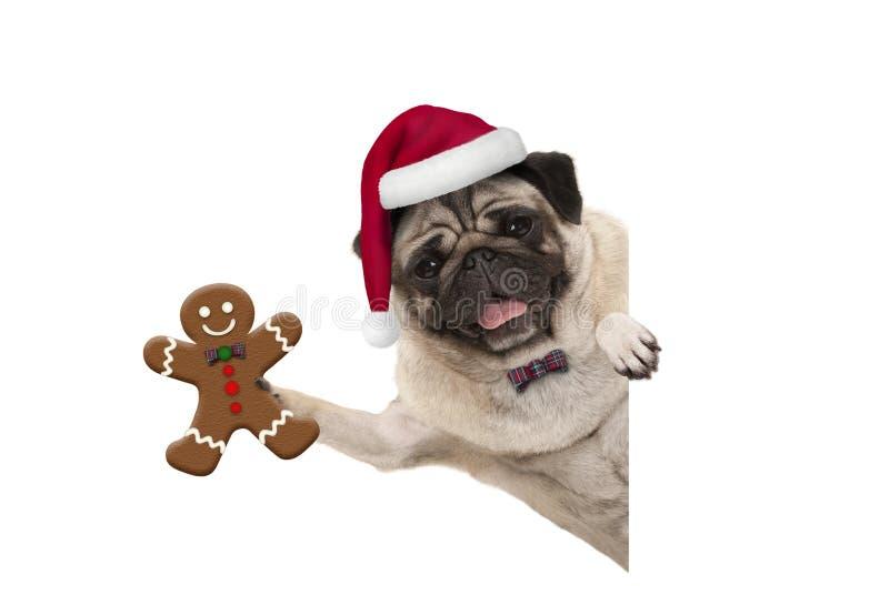 Il carlino sorridente di Natale insegue il sostegno dell'uomo di pan di zenzero e portare il cappello di Santa, con la zampa sull fotografia stock