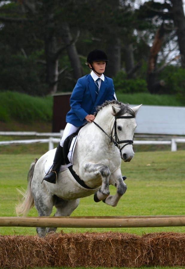 Il cavaliere che salta con il cavallo fotografie stock libere da diritti