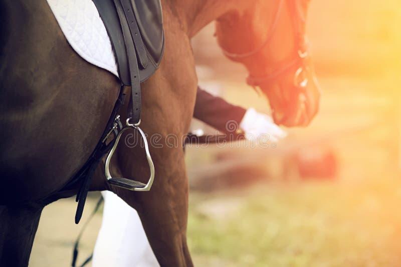 Il cavaliere conduce dalla briglia di un cavallo, che ha una sella sulla sua parte posteriore con una staffa fotografia stock