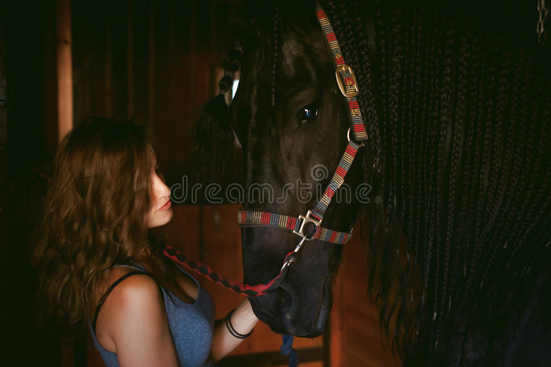 Il cavallerizzo della donna libera dalla sporcizia con il cavallo frisone della spazzola in stalle sull'azienda agricola immagini stock