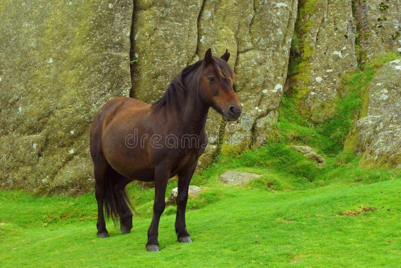 Il cavallino immagini stock libere da diritti