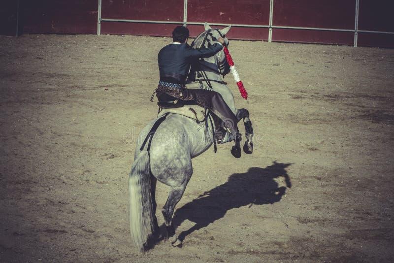 Il cavallo bianco, corrida, Spagnolo tradizionale fa festa dove un matado immagine stock