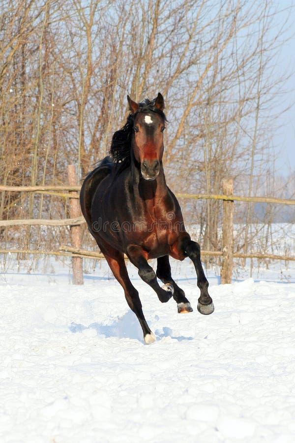 Il cavallo cammina l'inverno fotografia stock libera da diritti