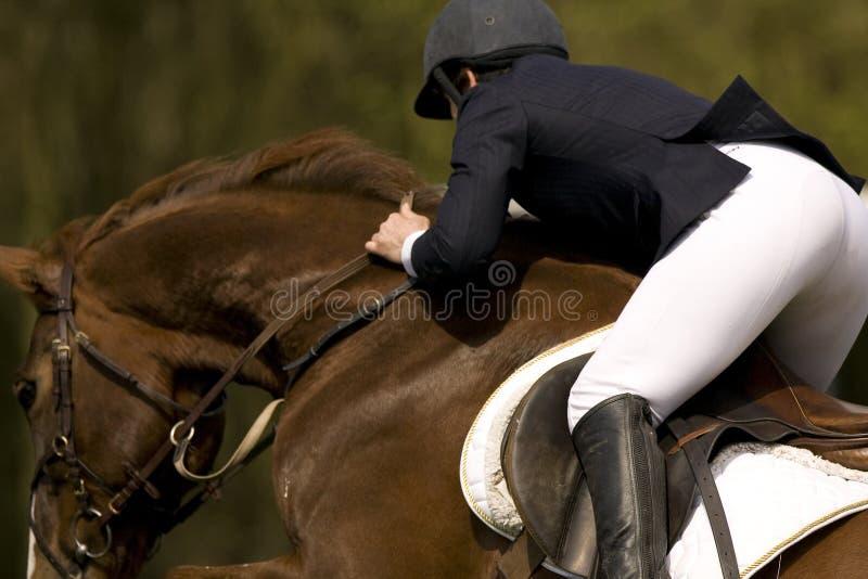 Il cavallo che salta 010 fotografia stock libera da diritti