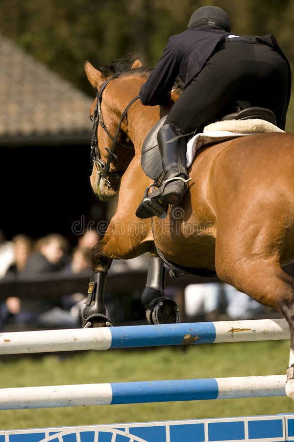 Il cavallo che salta 017 fotografia stock