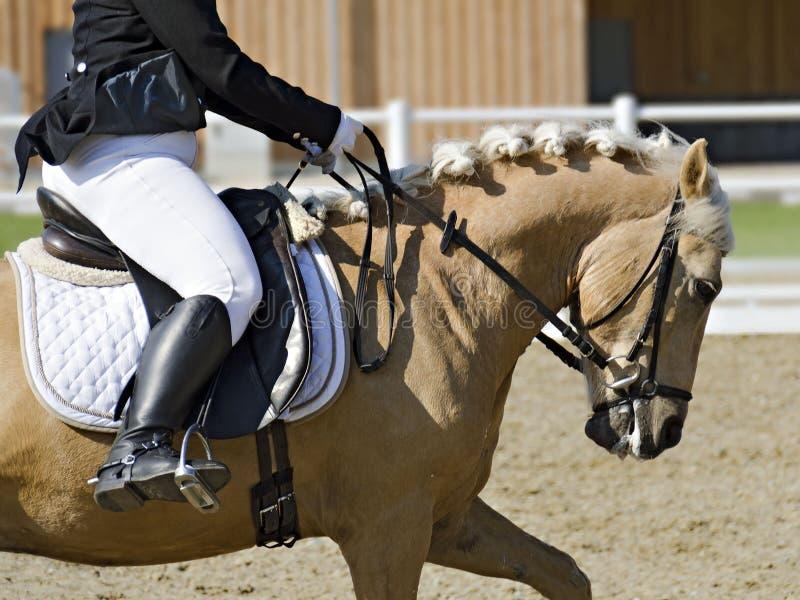 Il cavallo con il cavaliere femminile si è vestito nell'abitudine classica di dressage fotografie stock libere da diritti