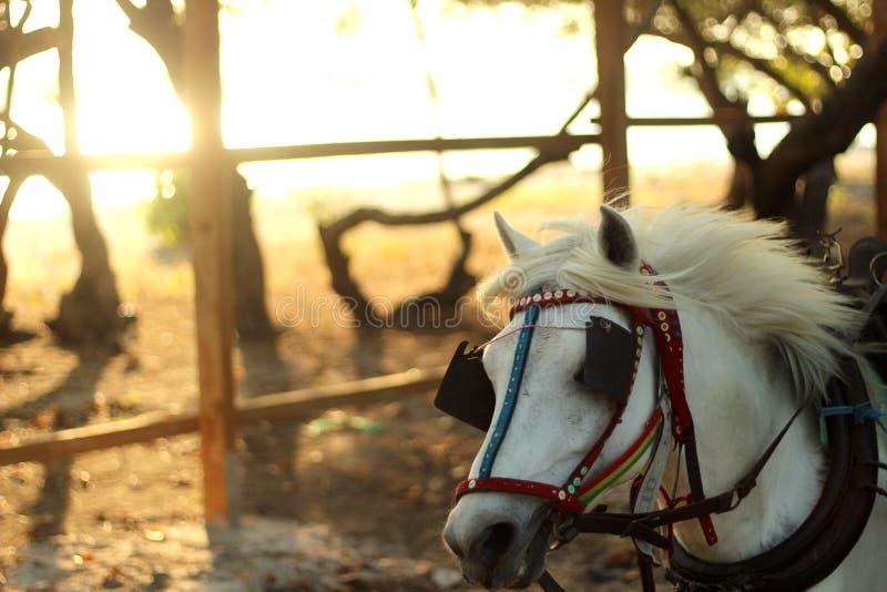 Il cavallo corrente fotografie stock
