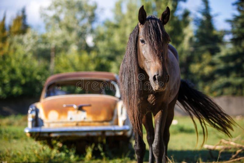Il cavallo di Brown esamina la struttura, va incontrarsi fotografia stock libera da diritti