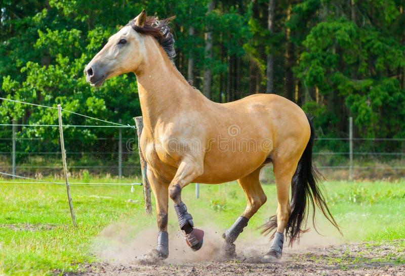 Il cavallo di Brown sta su un recinto immagini stock