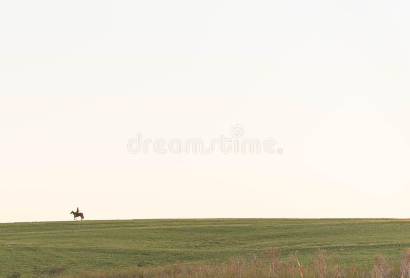 Il cavallo e la conclusione del pomeriggio immagini stock
