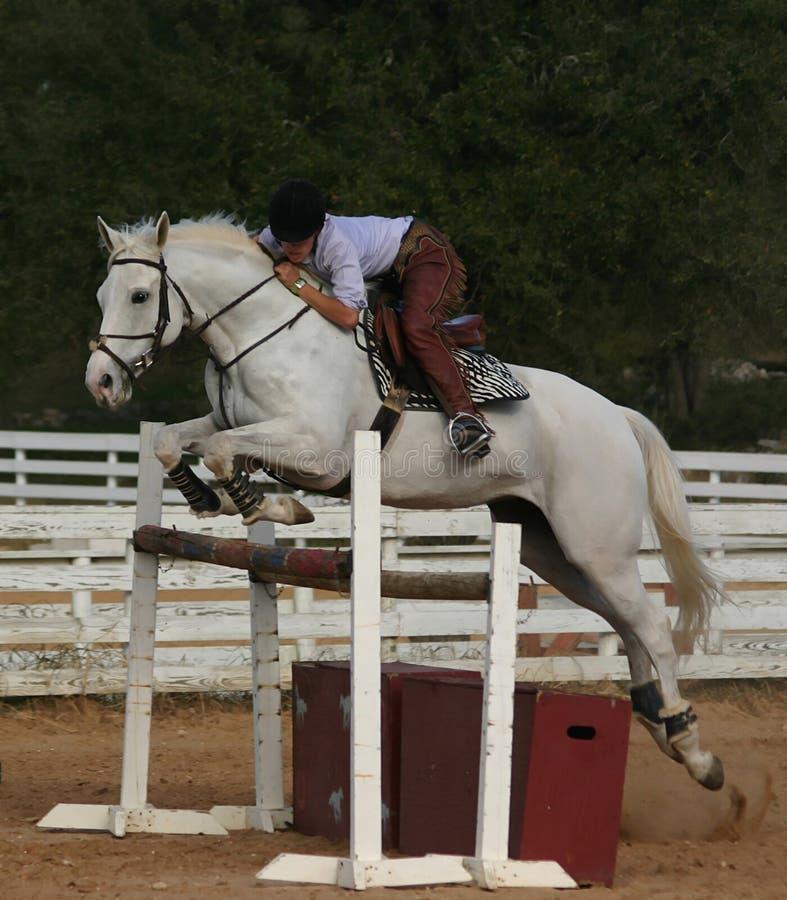 Il Cavallo Grigio Salta Immagini Stock Libere da Diritti