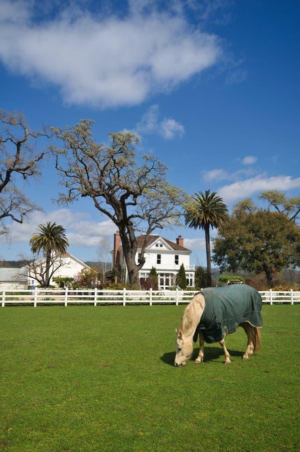 Il cavallo mangia l'erba in pascolo con la casa e la rete fissa. immagine stock libera da diritti