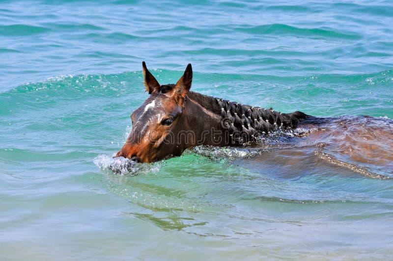 Il cavallo nuota nel mare fotografia stock libera da diritti