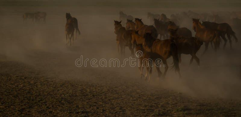 Il cavallo selvaggio raduna il funzionamento nel deserto, kayseri, tacchino fotografie stock libere da diritti