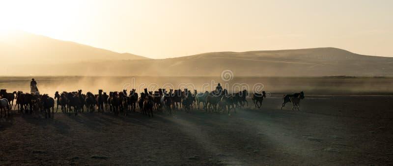 Il cavallo selvaggio raduna il funzionamento nel desrt, kayseri, tacchino immagini stock libere da diritti