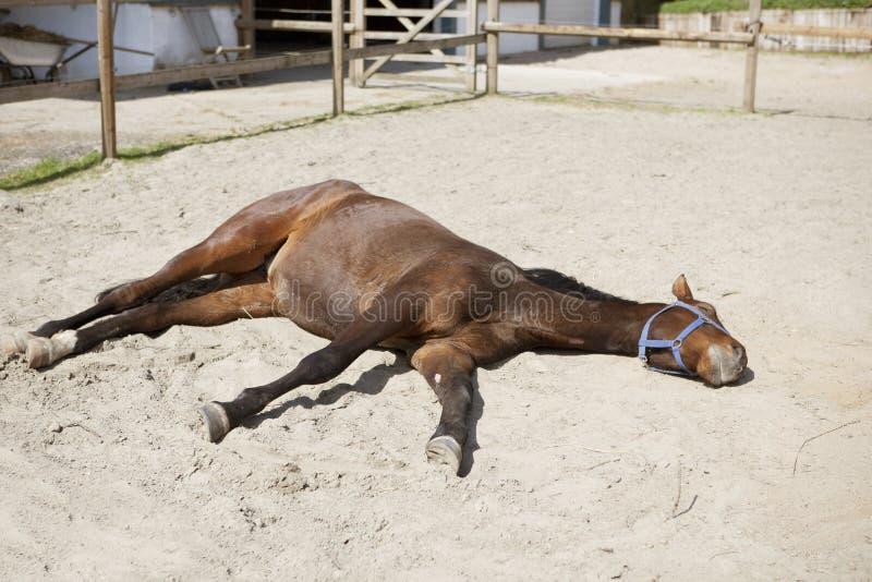 Il cavallo sta trovandosi al sole fotografia stock
