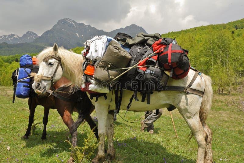 Il cavallo trasporta gli zainhi fotografia stock libera da diritti