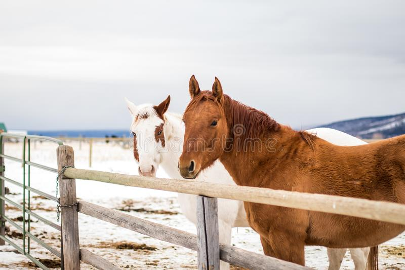 Il cavallo: un bello + amico ricco di guida immagini stock libere da diritti