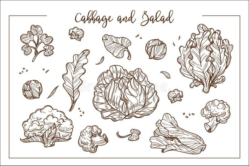 Il cavolo e l'insalata in mazzi o teste e separano le foglie royalty illustrazione gratis