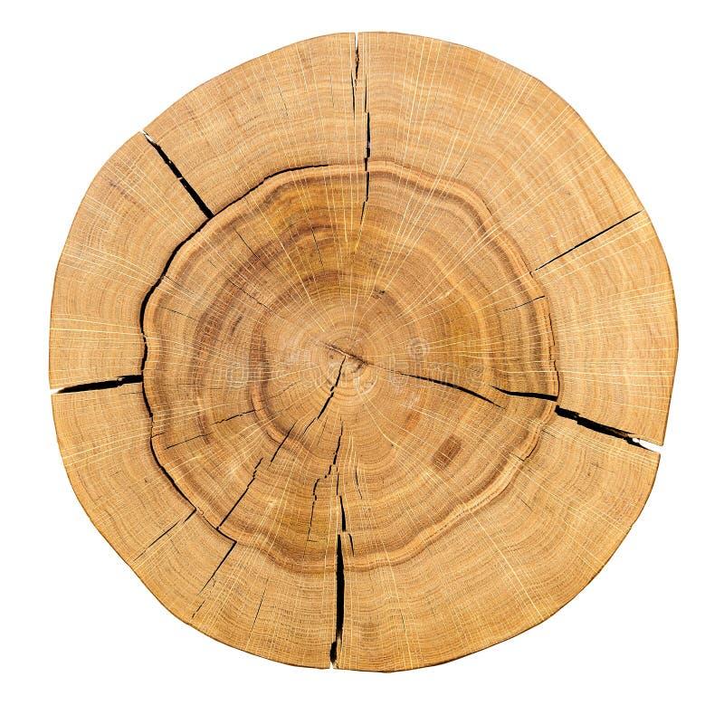 Il centro di un ceppo di legno isolato su un fondo bianco Vista superiore Fondo, serie di struttura immagine stock
