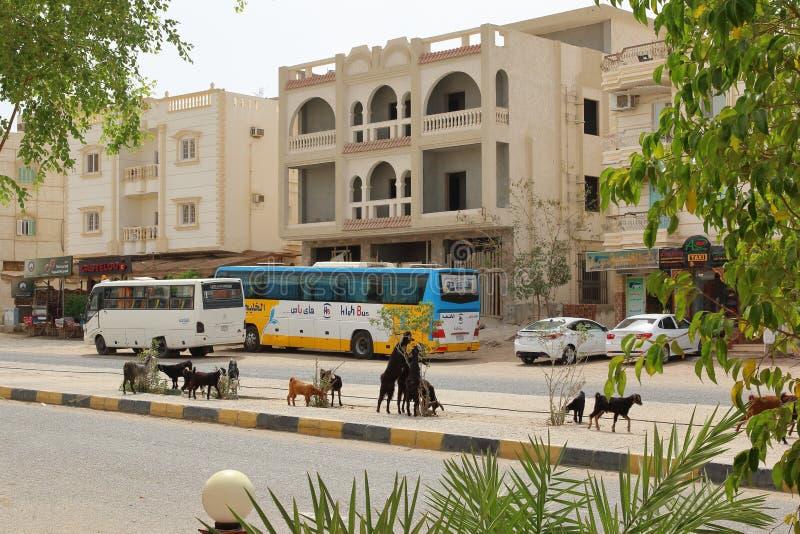 Il centro urbano di Marsa Alam, Egitto fotografia stock libera da diritti