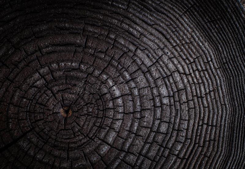 Il ceppo carbonizzato dell'albero abbattuto - sezione del tronco con gli anelli annuali La fetta ha bruciato il legno nero fotografia stock libera da diritti