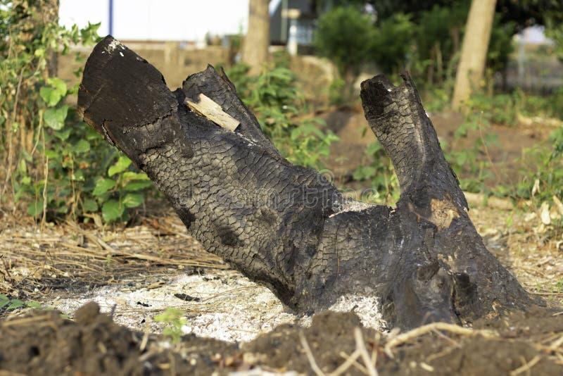 Il ceppo dell'albero bruciato in nero fotografie stock