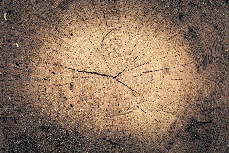 Il ceppo della quercia ha abbattuto - la sezione del tronco con gli anelli annuali Legno della fetta fotografia stock