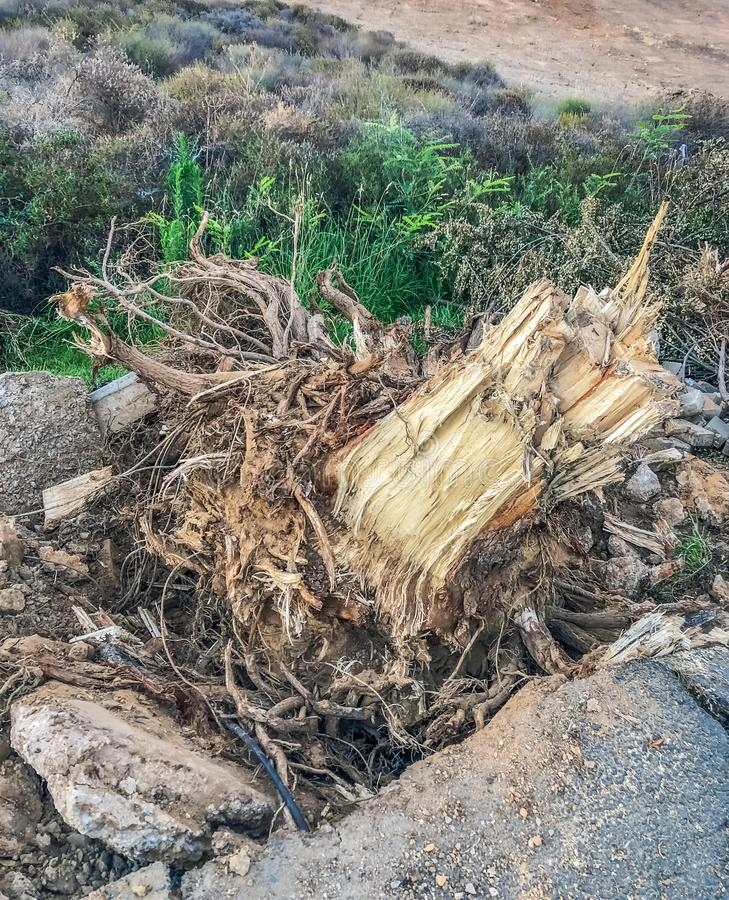 Il ceppo di albero dopo l'albero del lato della strada è stato cutdown ed allora estratto dopo che ha invaso i marciapiedi offens immagini stock