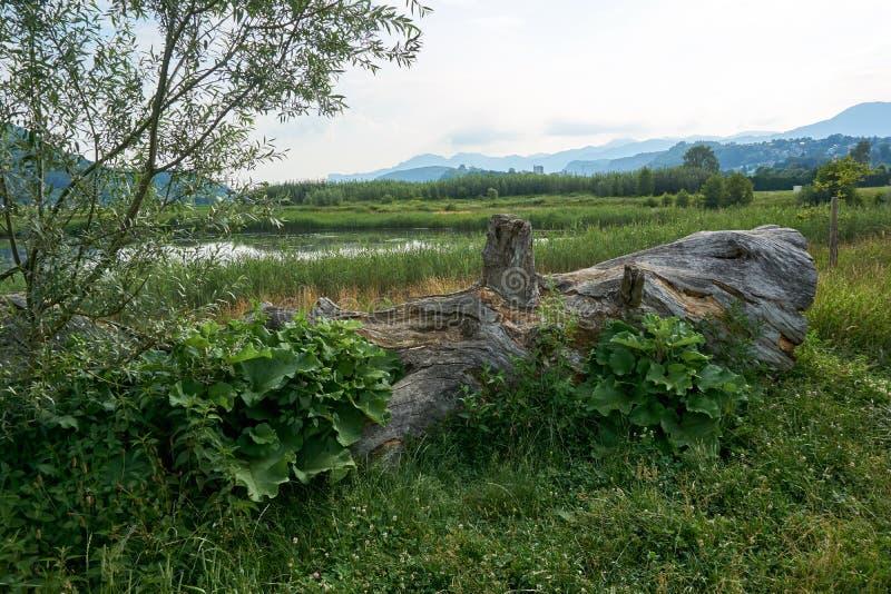 Il ceppo di albero si trova sulla terra fotografia stock