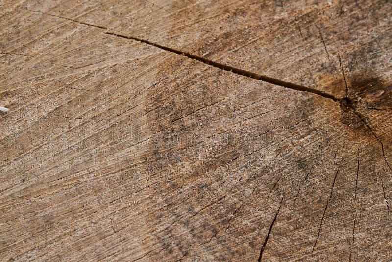Il ceppo di un tronco di albero segato con gli anelli annuali fotografie stock