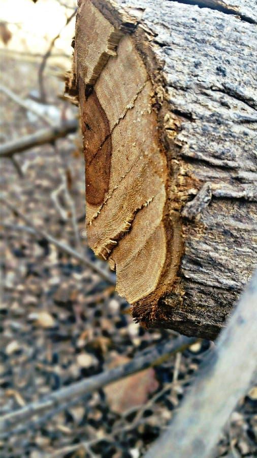 Il ceppo può essere di legno fotografia stock