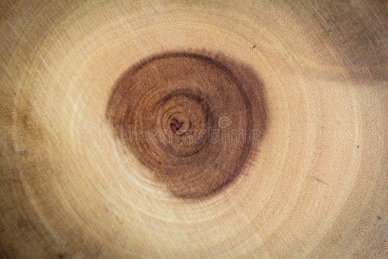 Il cerchio del modello di legno formato dalla natura ed indica l'età dell'albero fotografie stock