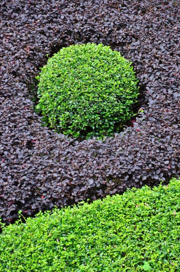 Il cerchio verde si è formato da Bushes della porpora e del verde immagine stock